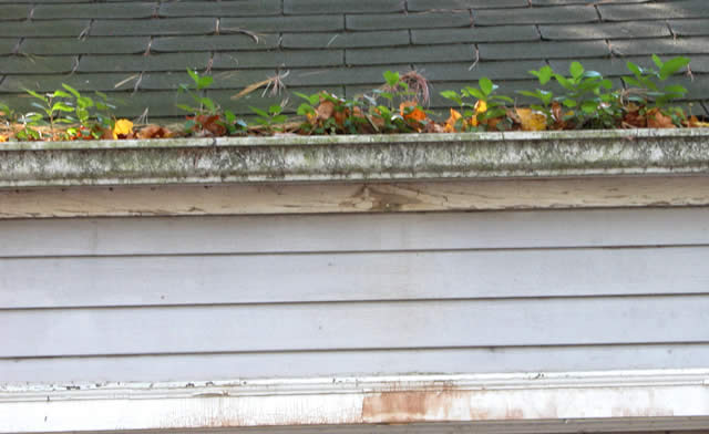 Tips For Cleaning Outside Of The Gutters Life Maid Easy