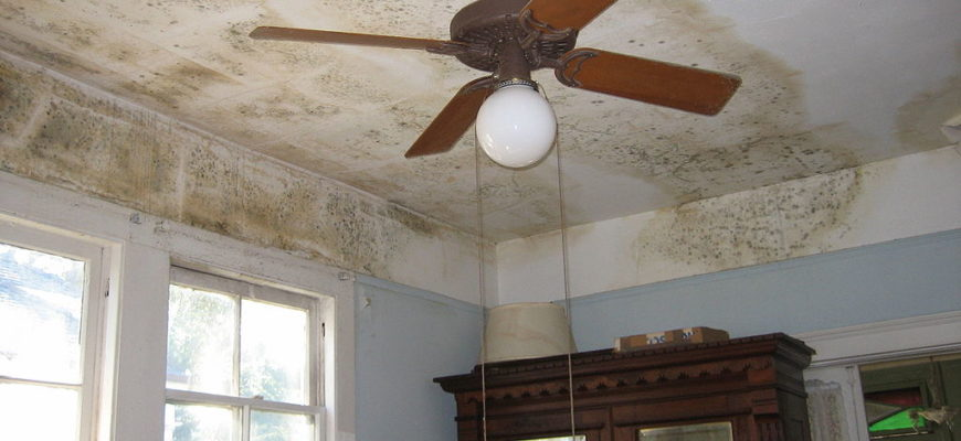 Cleaning And Killing Black Mold With Common Non Toxic Household Products